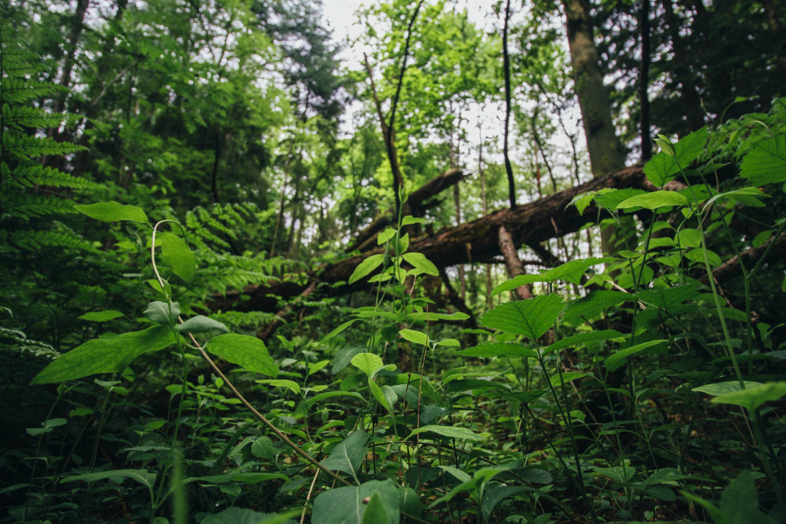 Durchatmen im Wald