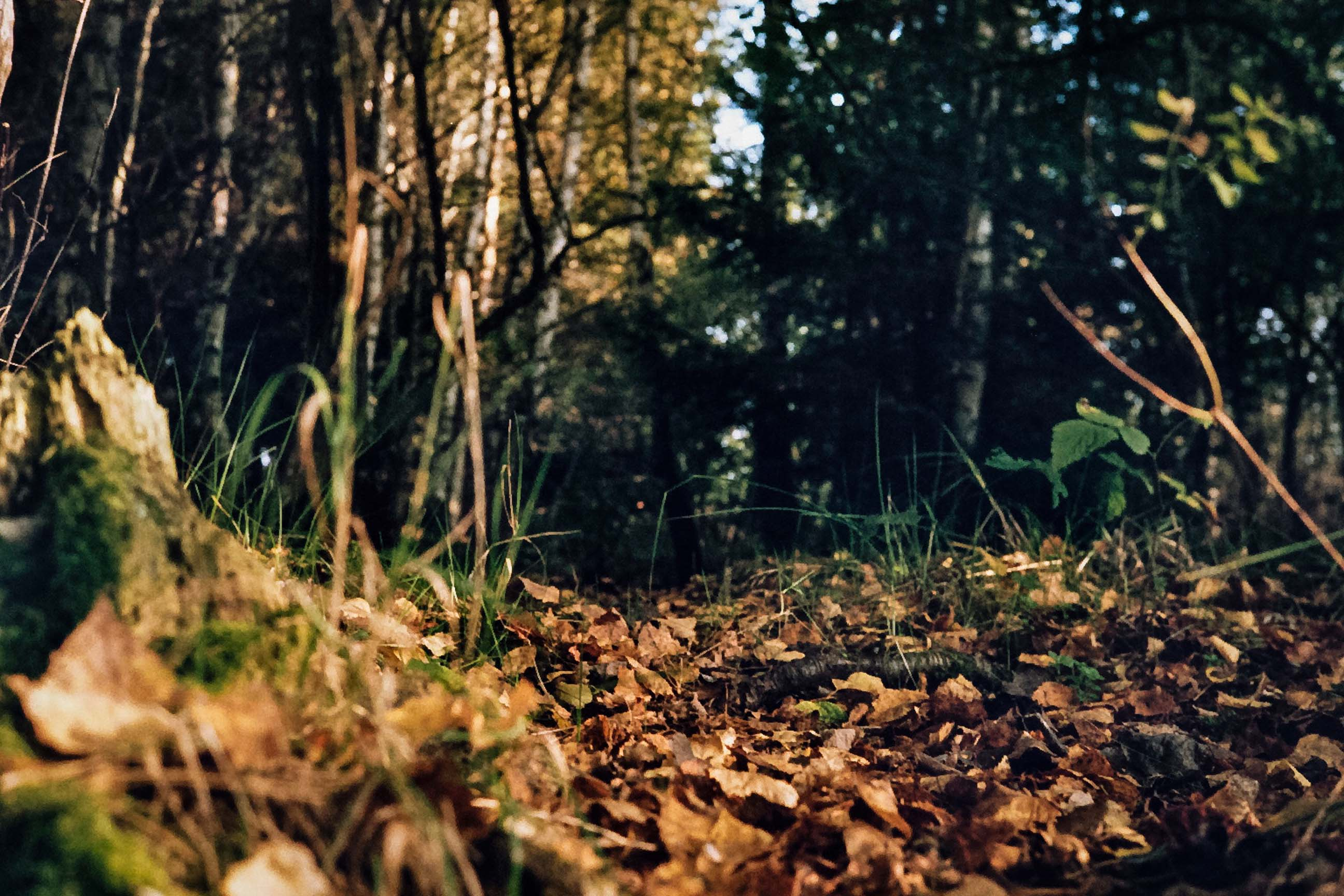 Analog - Im Wald - Herbst